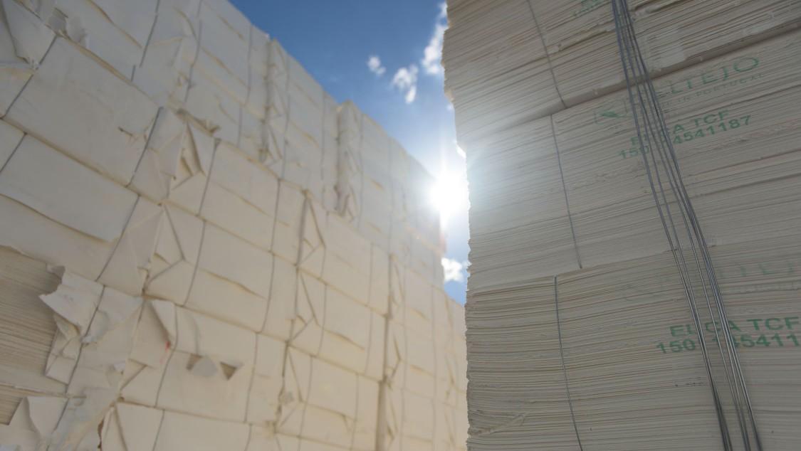 paper fiber industry